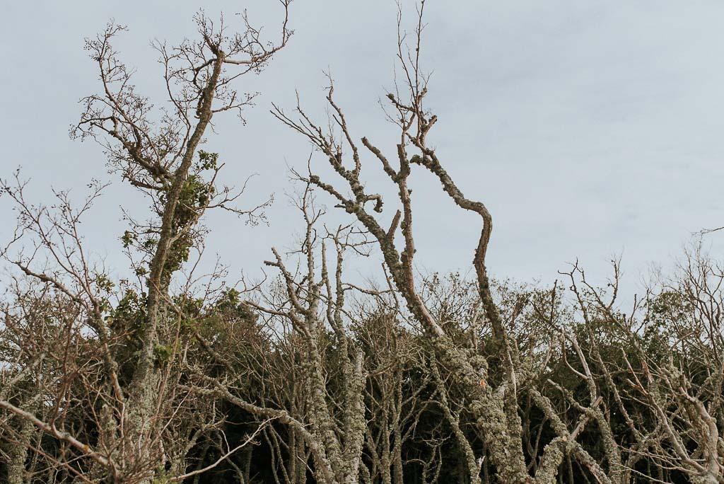 wesele sesja nad morzem uschnięte korony drzew na wydmach w łebie