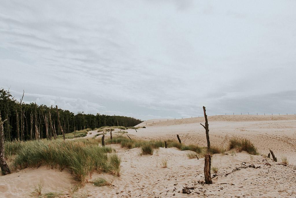 wesele sesja nad morzem trawy na wydmach