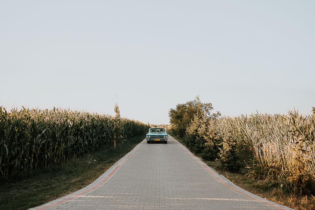 cadillac wśród pól z kukurydzą