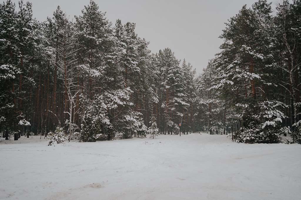 las zimą, śnieg, zimowa sesja Piotr czyżewski fotografia