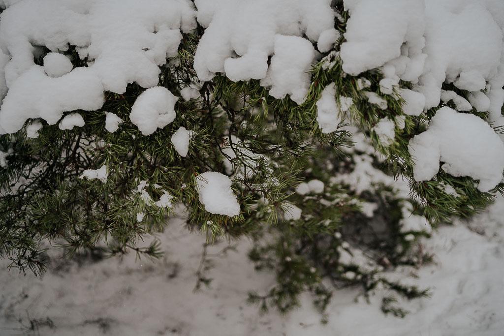 śnieg na drzewie, zimowa sesja Piotr czyżewski fotografia